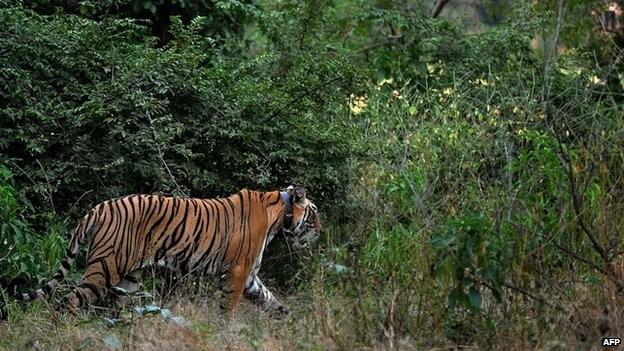 Royal Bardia National Park Tour