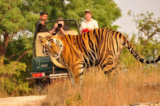 Nature and Wildlife tour