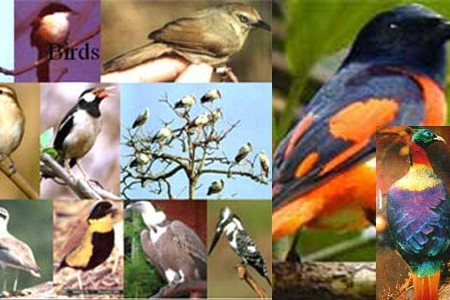 Bird Watching Tour in Nepal